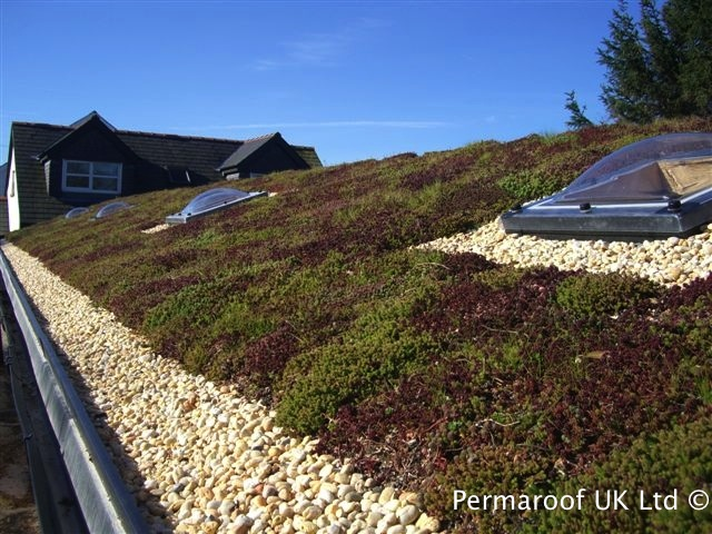 Green Roofing at Permaroof UK